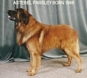 Parsley Crufts